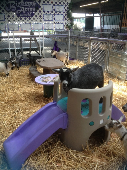 Goat attempting slide trick. It would def be a feat to stay upright on all four hooves before hitting the straw. Just saying.